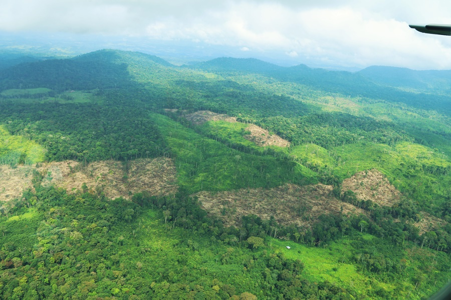 A recent forest clearing in Central America. CREDIT: WCS.