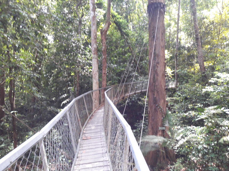 If you take the blue trail of Santubong National Park, you'll find yourself on this hanging bridge.